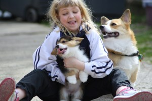 Wendt Worth Corgis...Keep kids and pets safe!