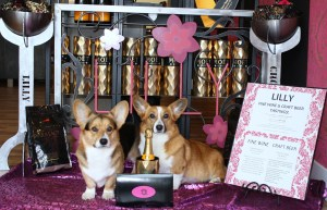 Wendt Worth Corgis Valentines Day Litter Announcement