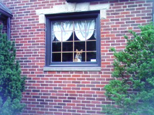 Wendt Worth's Rhiannon..How much is that doggy in the window?