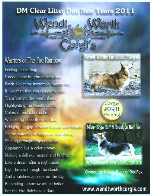 WENDT WORTH CORGIS DM CLEAR LITTER