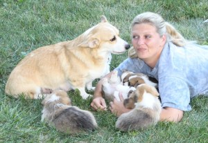 Wendt Worth Corgis Litter