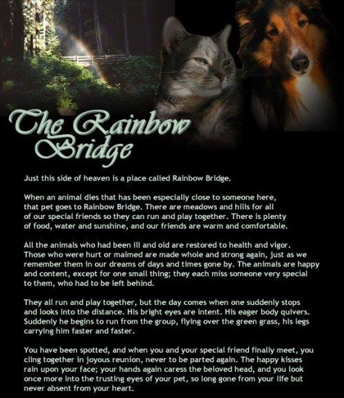 Dog pass comfortably over rainbow bridge wendt worth corgi s weblog